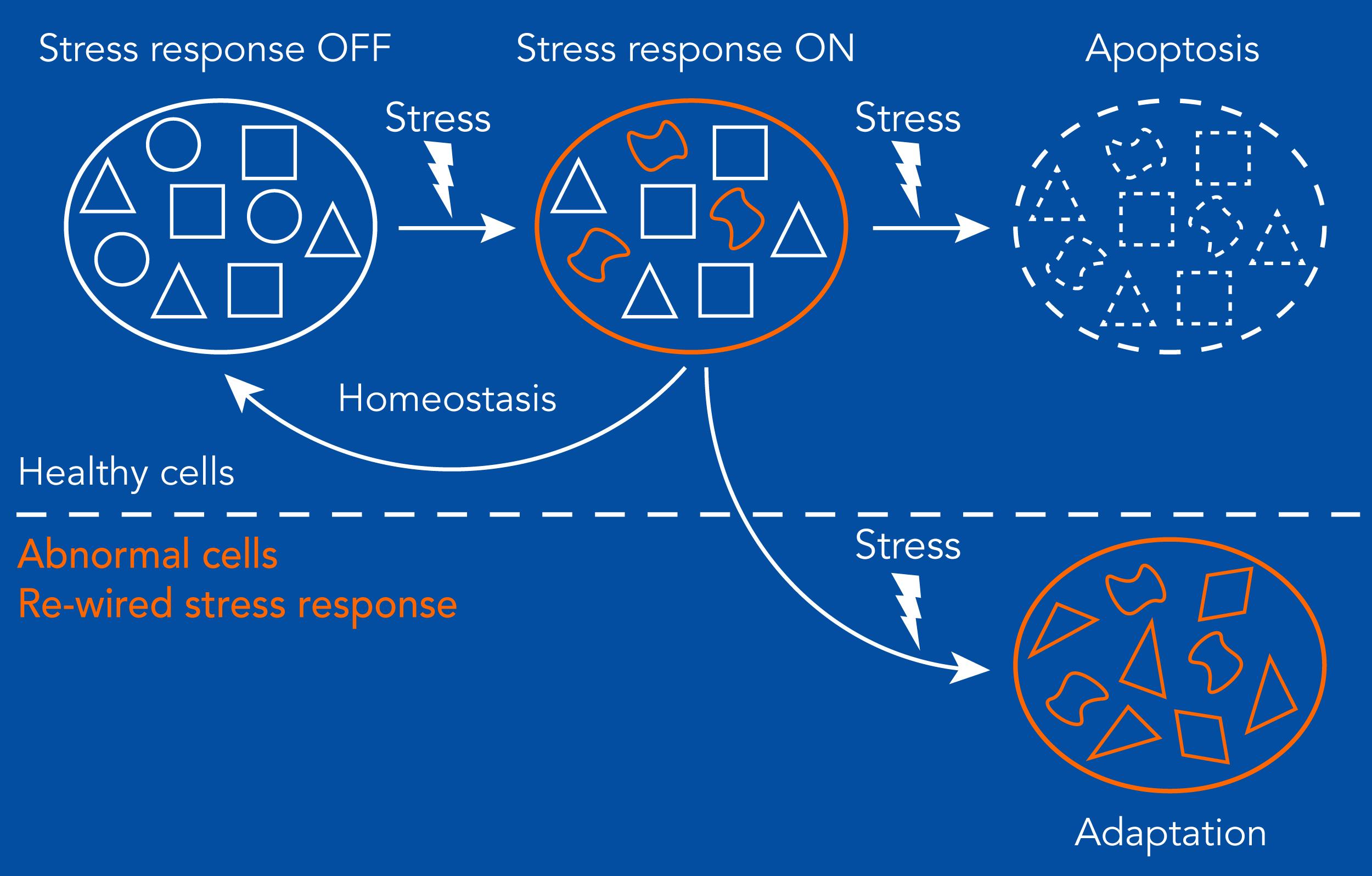 Network Re Wiring In Disease Diego Acosta Alvear Lab Molecular Wired Diagram